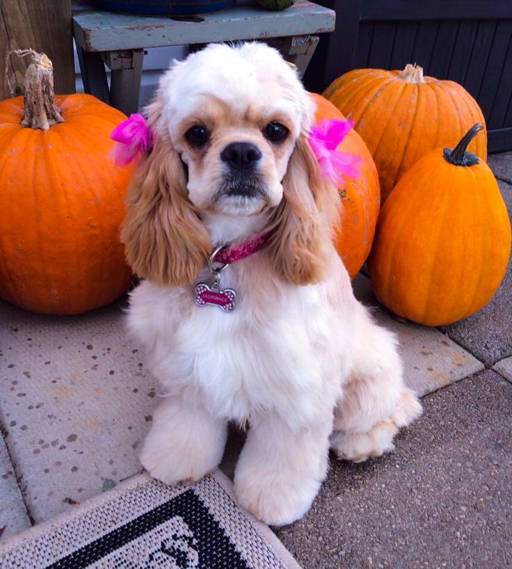 LillyGrace - pink bows and 7 months old ~~dn