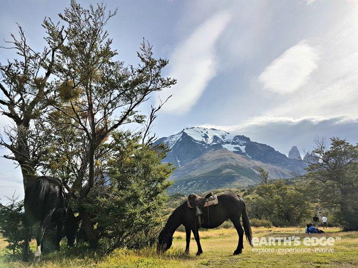 Patagonia Trek - Horse riding