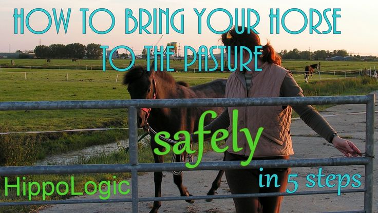 How to bring your horse to the pasture (safely)