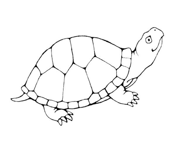 68 best images about projects to try on pinterest big for Yertle the turtle coloring page