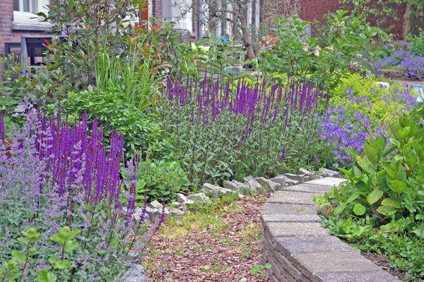 De randen van de borders van collectieve tuin 'De Omscholing' zijn gemaakt van hergebruikte stoeptegels. Salvia nemorosa zorgt voor kleur. Ontwerp Tuinatelier Herman & Vermeulen.