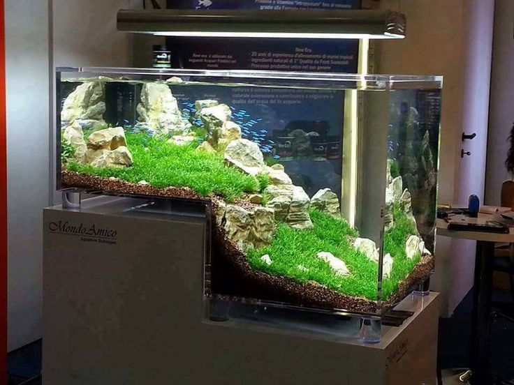 best 25 aquarium einrichten ideas on pinterest betta. Black Bedroom Furniture Sets. Home Design Ideas