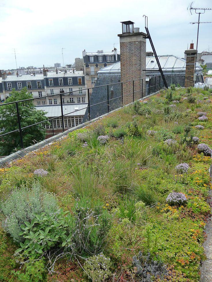 Le potager expérimental sur les toits d'AgroParisTech (Paris 5e) http://www.pariscotejardin.fr/2013/06/le-potager-experimental-sur-les-toits-d-agroparistech-paris-5e/