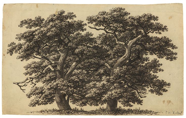 Carl Wilhelm Kolbe d. Ä.  Berlin 1759 – 1835 Dessau  Zwei Eichen. Feder in Schwarz über Bleistift auf Bütten. 21,2×34,4 cm (8 ⅜×13 ½ in.)