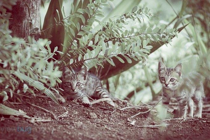 temple Cats  #cat #cute #cutecat #katzenbabys #tierfotografie #animalphotography #tiere #süsse #katzen #lightroom