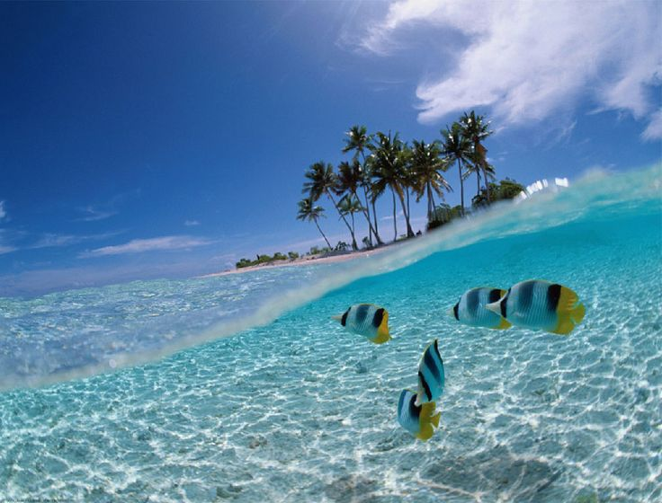 Beauty under the sea at Bunaken. Bunaken located at the northern tip of the island of Sulawesi, Indonesia.
