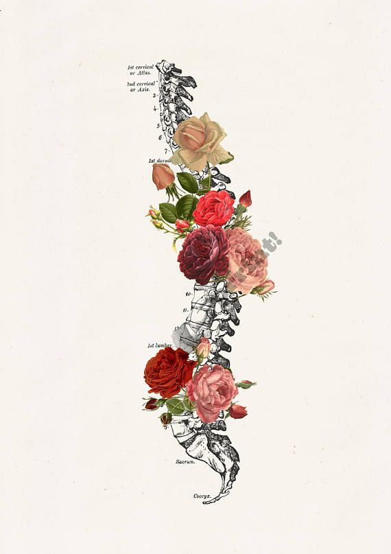 Springtime Roses Spine. Doctors gift Print A4 Wall art Human