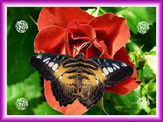 Летием свадьбы, красивые картинки цветов и бабочек с анимацией