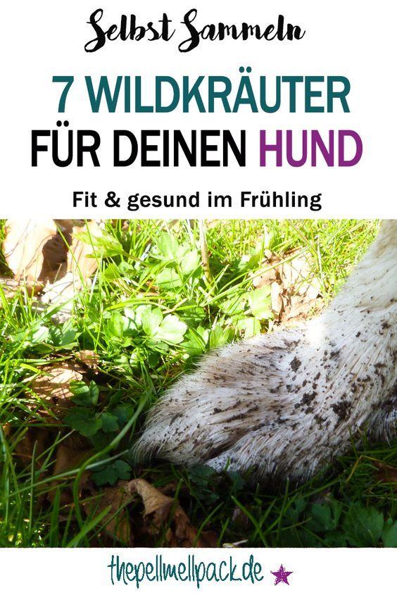7 Wildkräuter direkt vor Deiner Haustür - Die gesunde Frühjahrskur für Deinen Hund | gesundes Futter | Kräuter für Hunde | thepellmellpack.de
