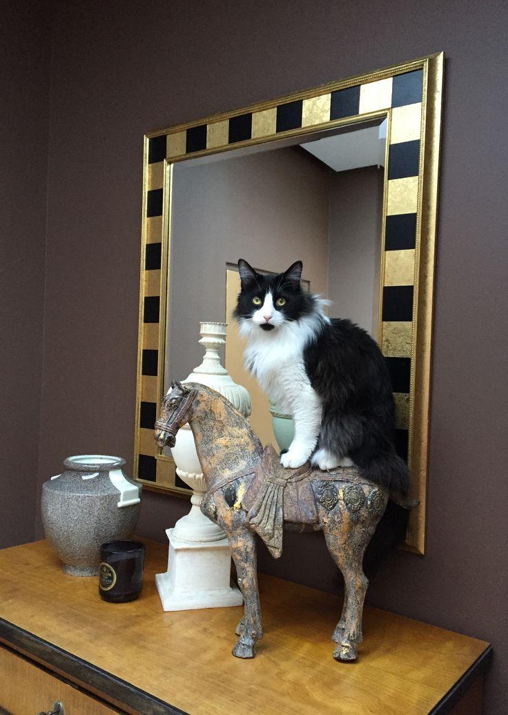 Pin by Nora Schneider Interior Design on Dex Cat pose