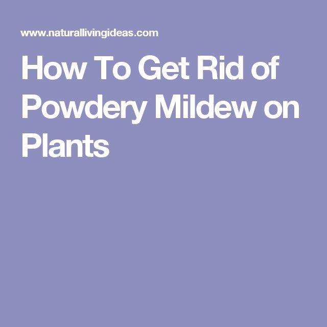 best 25 powdery mildew ideas that you will like on pinterest