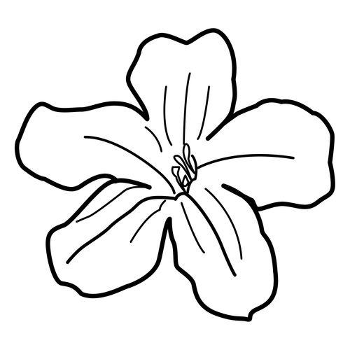 dibujos de flor maga para colorear