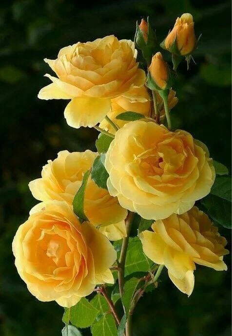 Pretty yellow flowers for dining room or bathroom