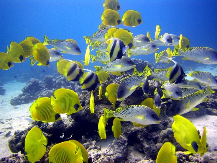 ...fantastica vita sott'acqua!  #diving #sub #subacquea #MarRosso