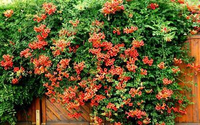17 best images about pflanzen on pinterest sun lavender. Black Bedroom Furniture Sets. Home Design Ideas