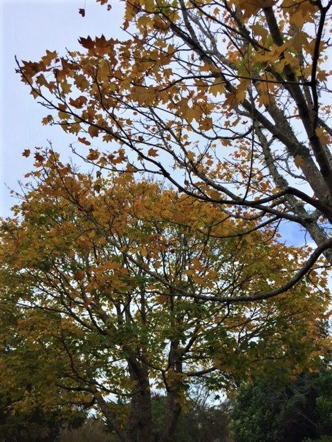 Use up those Autumn leaves!