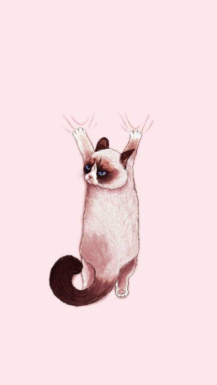 Cats Tumblr Picture In 2020 Iphone Wallpaper Cat Cat Wallpaper Cat Aesthetic