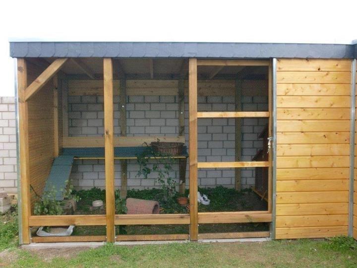 The 25 best rabbit enclosure ideas on pinterest outdoor for Outdoor rabbit enclosure ideas