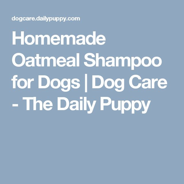 Homemade Oatmeal Shampoo for Dogs   Dog Care - The Daily Puppy