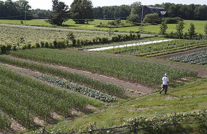 How To Earn $140k Farming 1.5 Acres   Market garden ...