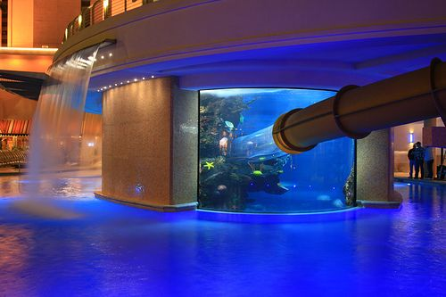 Golden Nugget Water Slide!  Stayed here in 2008 for Spring Break!  Such a cool pool!