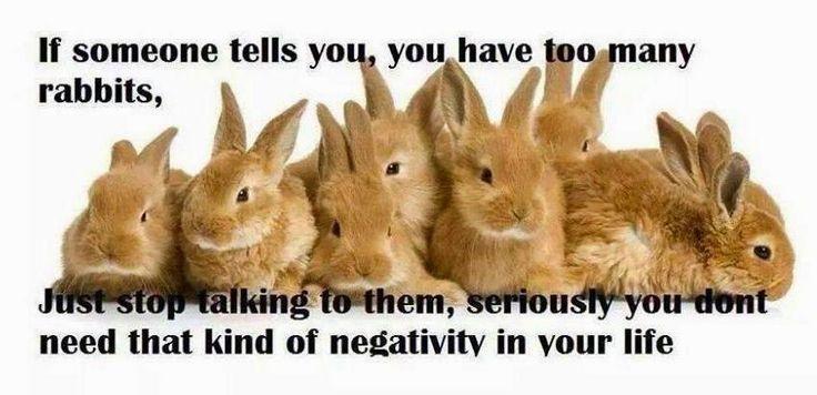 rabbit meme | Rabbit Ramblings: Bunny Monday Meme*day