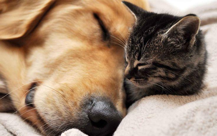 Kosestund med bestevennen ❤️ Frihetens arv, www.frihetensarv.no, Katt, Morsom katt, Søt katt, Hund, Hundetrening, Morsom hund, Hund og katt, Kjæledyr, Søt hud, Vakker hund, Valp, Kattunge, Lek, Quotes