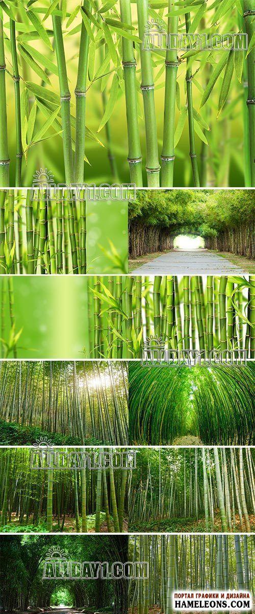 Бамбуковый лес, роща, зеленые стебли бамбука - растровые природные фоны | Bamboo