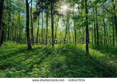Kostenloses Bild auf Pixabay - Wald, Sonne, Strahlen, Nebel, Natur