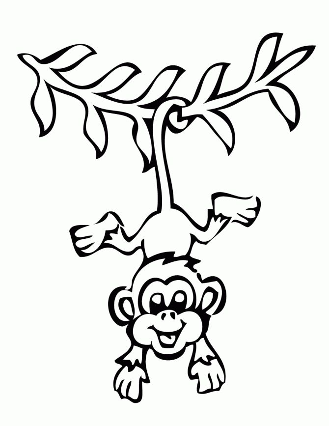 Line Drawing Monkey : Best monkey drawing ideas on pinterest black