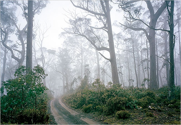 Eucalyptus forests in Tassie's Ben Lomond are great for biking and hiking.