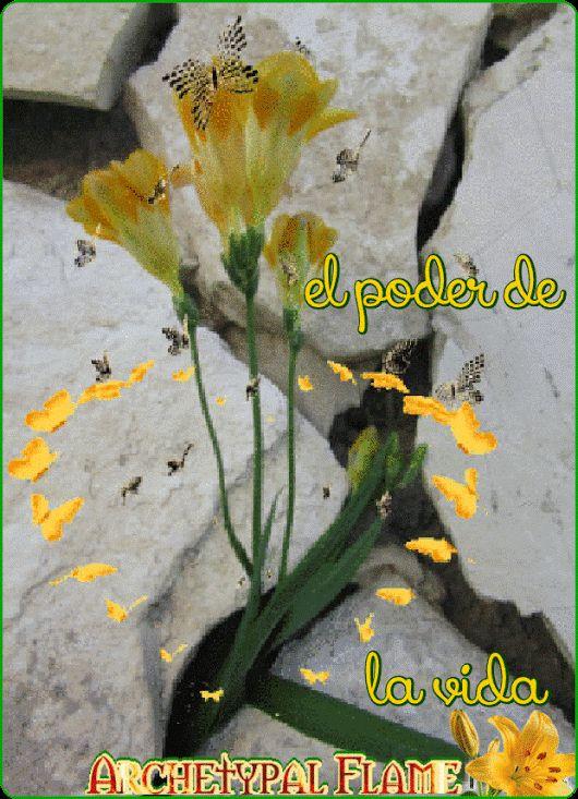 Archetypal Flame - El poder de la vida  the power of life  Η δύναμη της ζωής   O poder da vida  la forza della vita  Le pouvoir de la vie  de Kracht van het Leven  Kraft des Lebens  Сила жизни  moć života  #power, #life,#δύναμη, #ζωής, #poder, #vida, #poder, #vida, #forza, #vita, #pouvoir, #vie, #Kracht, #Leven, #Kraft, #Lebens, #Сила, #жизни, #moć, #života, #archetypal, #beauty, #health, #inspiration,#2561000sep1st2017