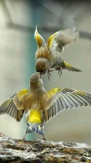 Alla zampa di ogni uccello che vola è legato il filo dell'infinito. Victor Hugo La gioia è come il volo. Emily Dickinson Nessun uccello vola appena nato, ma arriva il momento in c…