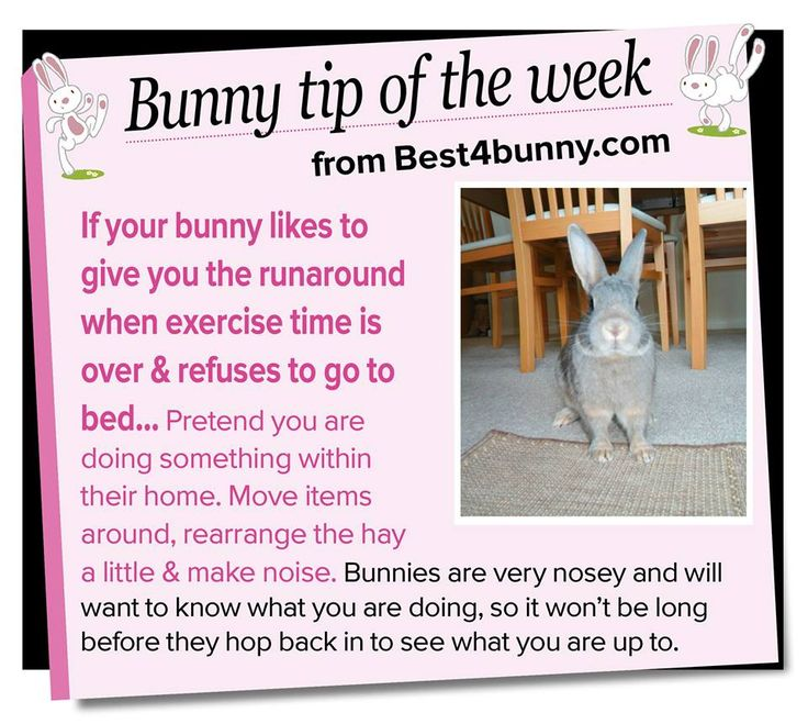 Bunny tip of the week - try this if your bunny gives you the runaround