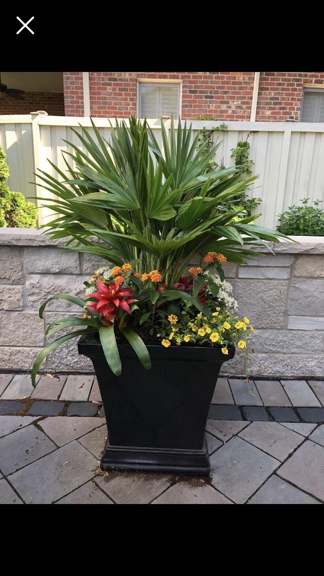 Giardinaggio Fiori.Pin Di Marina Toschi Su Giardinaggio Vasi In Fiore Giardinaggio