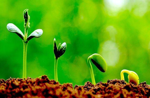 I microrganismi effettivi permettono di sostituire fertilizzanti e pesticidi in ogni tipo di coltivazione, consentendo la produzione di alimenti più ricchi di nutrienti e, in particolare, di antiossidanti. Niente chimica, niente OGM, niente multinazionali...http://goo.gl/RoxrpH Da più di 20 anni, viene impiegato in tutto il mondo con grande successo e senza nessun effetto indesiderato per la natura.