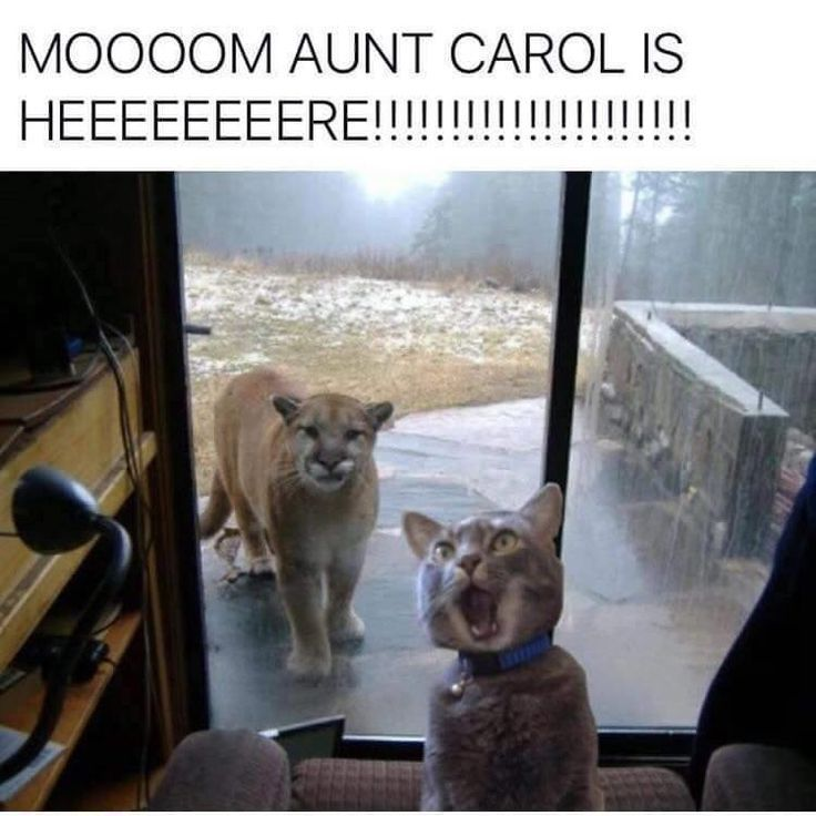 Mom's face matches the cat's face exactly, right now.