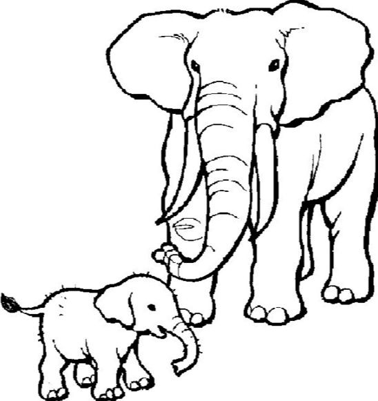 Elephant coloring pages to printfree printable coloring pagesanimal silhouetteanimal