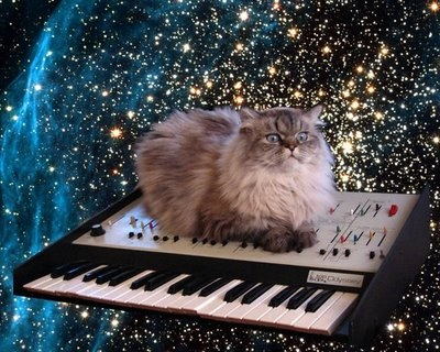 Synth cat!