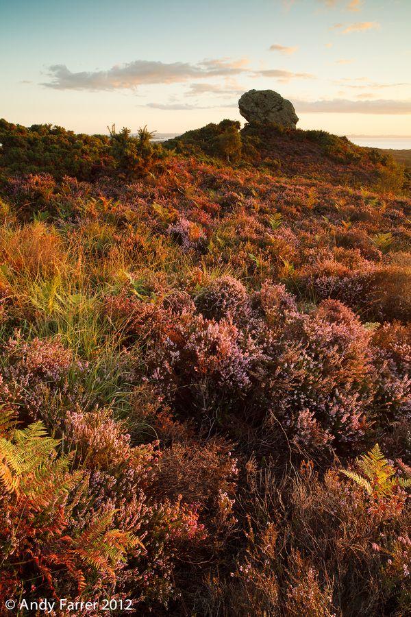 Agglestone Rock on Studland Heath in Dorset England Discover Purbeck