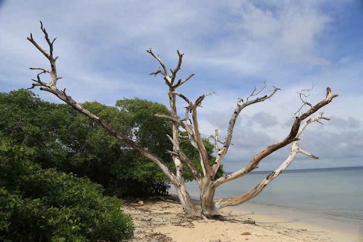 Coral Carribien: En dagtur til Nationalpark Islas del Rosario og koralrev