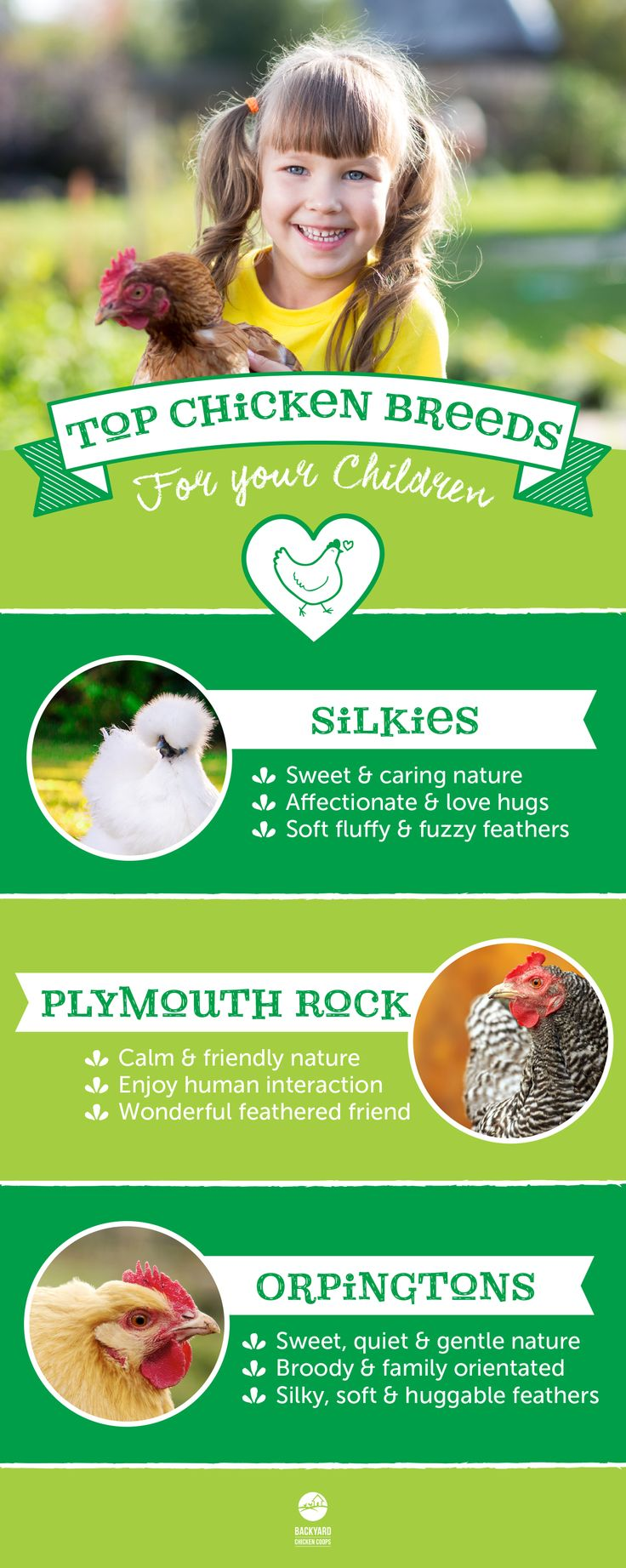best 25 small chicken breeds ideas on pinterest backyard coop