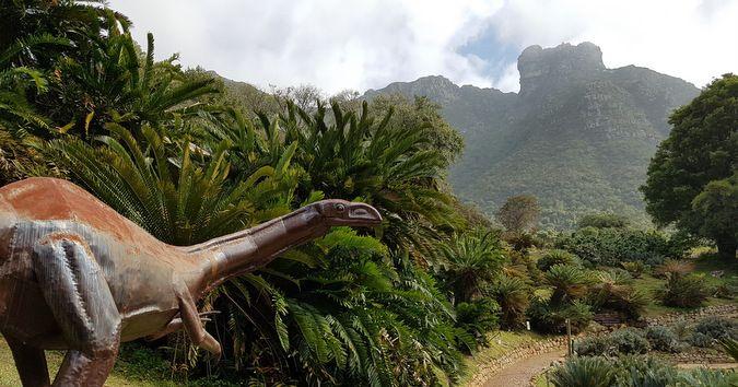 Saving the cycads from poaching #africa  https://buff.ly/2fiyKho?utm_content=buffer18042&utm_medium=social&utm_source=pinterest.com&utm_campaign=buffer