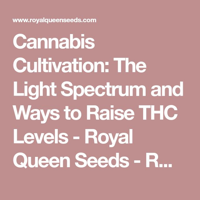 Cannabis Cultivation: The Light Spectrum and Ways to Raise THC Levels - Royal Queen Seeds - RQS Blog