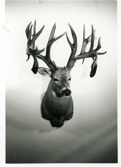 We put together a countdown of the highest-scoring whitetail bucks ever killed according to Boone and Crockett records.