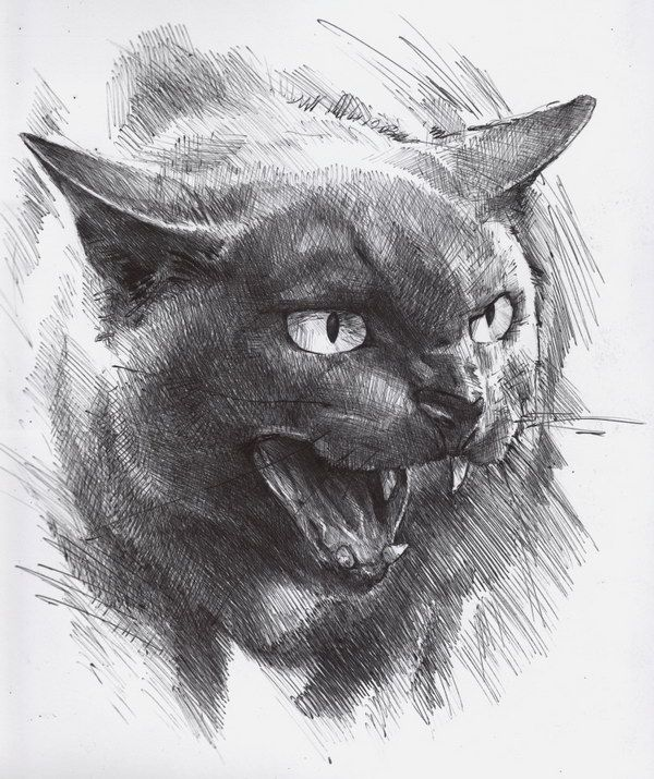 25 best ideas about drawings of cats on pinterest for Amazing hand drawings