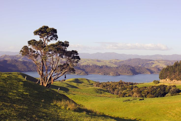 One Tree Hill (Coromandel, New Zealand)