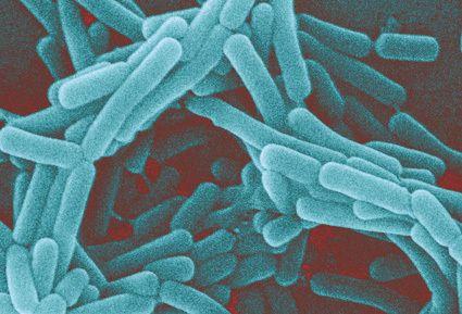 Tajemniczy grzybek tybetański – czym naprawdę jest i jakie są podstawy jego skuteczności? - Artykuły - Biotechnologia.pl - łączymy wszystkie strony biobiznesu