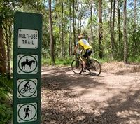Mt Cootha Forest