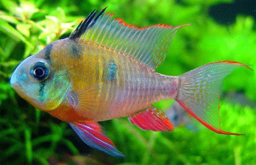 Image Detail for - Freshwater Aquarium Fish | Find the Latest News on Freshwater Aquarium ...